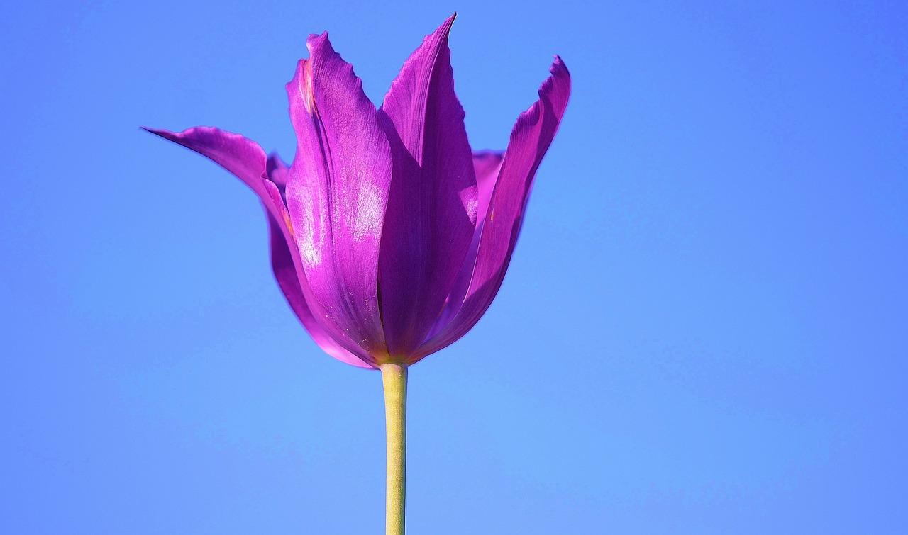 flower-176816_1280