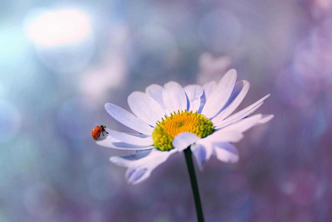 ladybug-1320563_1280